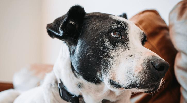 Euthanasia/End of Life Care